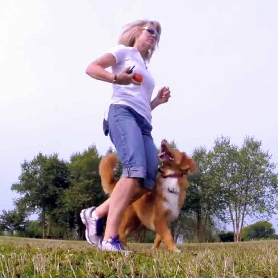 Here's Why You Should Train Your Dog