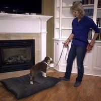 shop How to Start Generalizing the Place Concept Early in your Dog's Training