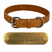shop 1 in. Harness Leather Standard Dog Collar