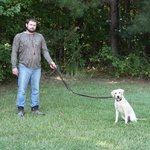 shop K9K 9 Way Lead 5' Configuration