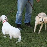 shop K9K 9 Way Lead Double Slip Configuration
