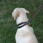 shop K9K 9 Way Lead Single Slip Configuration