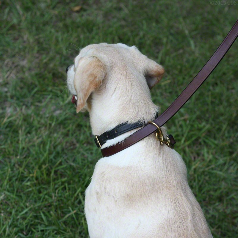 K9K 9 Way Lead Single Slip Configuration