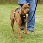 shop Kurgo Tru-Fit Smart Dog Car / Walking Harness on a Leed