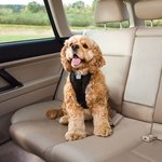 shop Kurgo Tru-Fit Smart Dog Car / Walking Harness with a Cocker Spaniel