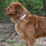 shop Mekenzi and Drew's Dog Moe (Golden Retriever)