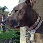 shop Neck-Tech Martingale Collar in Use