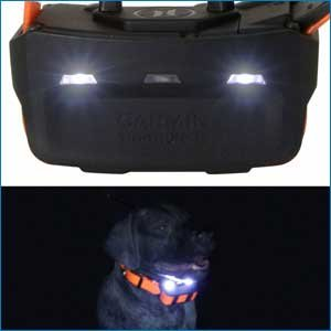 buy discount  New: Collar Lights