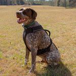 shop EasySport Harness on Dog