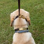shop Sunset Harness Leather Leash Slip Lead Style on Dog