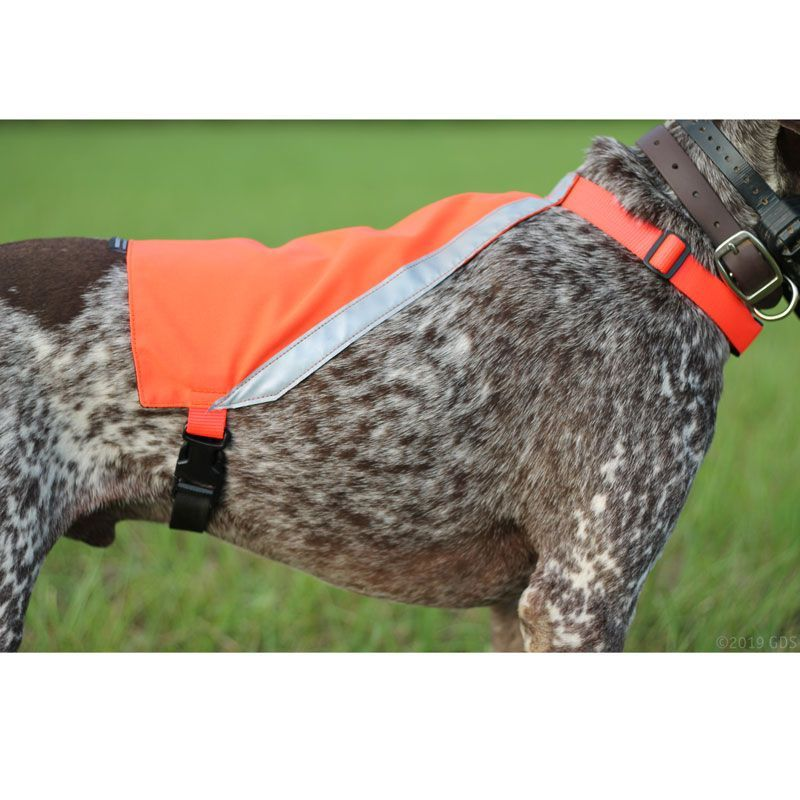 Visi vests dogs vision investments limited