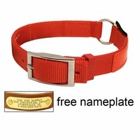 shop Orange Reflexite Center-Ring Safety Dog Collar - #1654