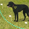 shop Pet Containment Systems, Wireless Dog Fences, & Extra Radio Collars