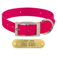 shop PINK 1 in. Day Glow Standard Collar