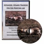 shop Poudre River Advanced Upland Training for the Pointing Lab with Gary Buys DVD
