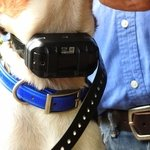 shop PRO Collar on a Beagle