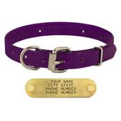 shop PURPLE 3/4 in. D-end Day Glow Collar