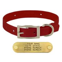 shop RED 3/4 in. Day Glow Standard Collar