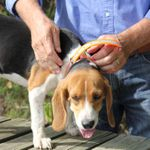 shop Reflective Center Ring Collar on a Beagle