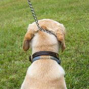 shop Reflective Chain Tree Lead Dog on Slip Lead