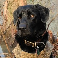buy  Retriever Hunting and Training Supplies