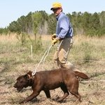 shop Ronnie Smith Quartering a Lab