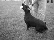 shop Smartwork Articles - FREE RETRIEVER TRAINING articles by Evan Graham