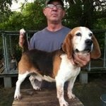 shop Steve M's Dog Spike (Beagle)