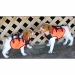 shop Sylmar Body Guard Dog Vest on Puppies
