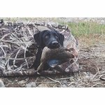 shop Tanglefree Little Buddy Dog Blind with Black Lab