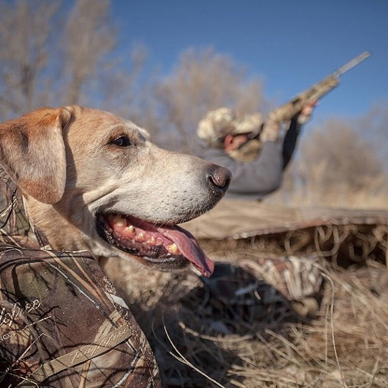 Tanglefree Little Buddy Dog Blind with Lab on a Hunt