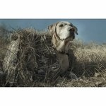 shop Tanglefree Little Buddy Dog Blind with Yellow Lab