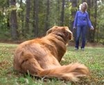 shop Three Things You Must Know to Have a Reliably Trained Dog