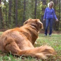 shop Tidying Up Your Dog's Recall