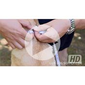 shop VIDEO: How To Measure Your Dog's Neck For A Collar