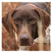 shop Why Shop with Gun Dog Supply?