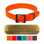 WigWag 1 in. Medium Dog Collar -- Fits 14-19 in. Neck