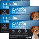 4 PACK CAPSTAR Blue for Dogs 2-25 lbs (24 tablets)