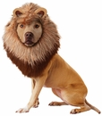 Animal Planet Lion Dog Costume - Medium