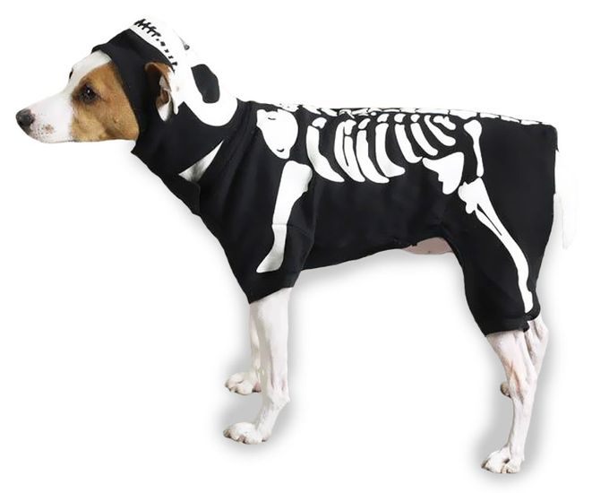 Casual Canine Glow Bones Costume - Multiple Sizes