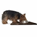 FurHaven Muddy Paws Towel & Shammy Rug - Mud (Small)