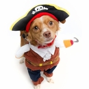 Pet Krewe Pirate Dog Costume - Medium
