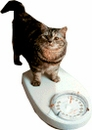 Pet Weight Loss