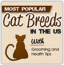The Most Popular Cat Breeds in the US