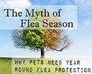 There is No Flea Season - Protect Your Pet Year Round