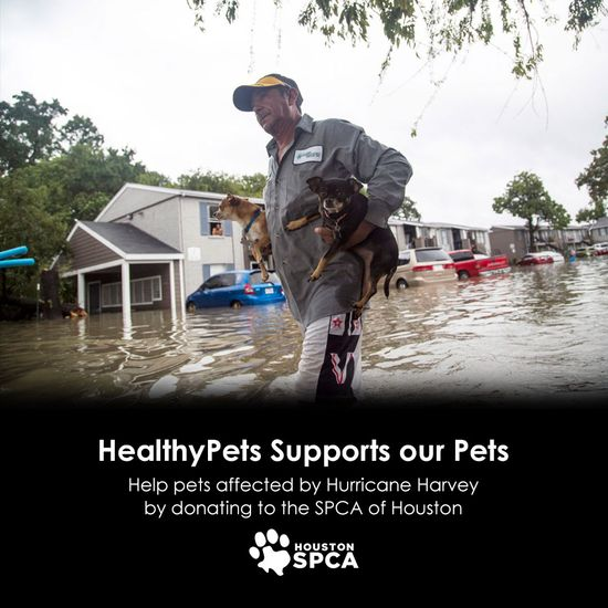 We Match Your Donation to the Houston SPCA