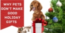 Why Pets Don't Make Good Holiday Gifts?