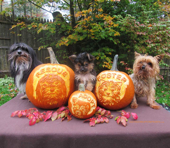 Please Adopt A Dog Pumpkin