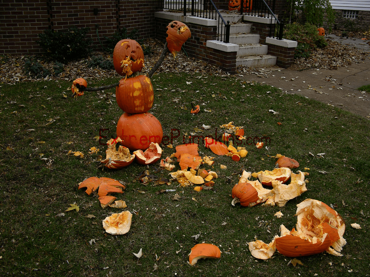 The Territorial Pumpkin on my Lawn