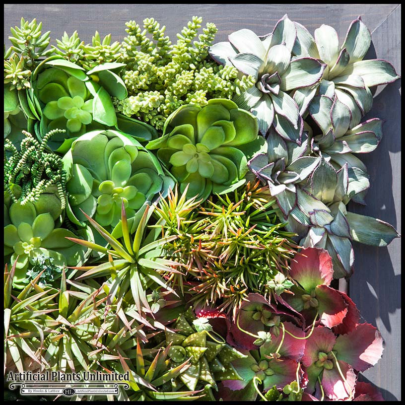 Exotic Indoor Artificial Succulent Walls Artificial